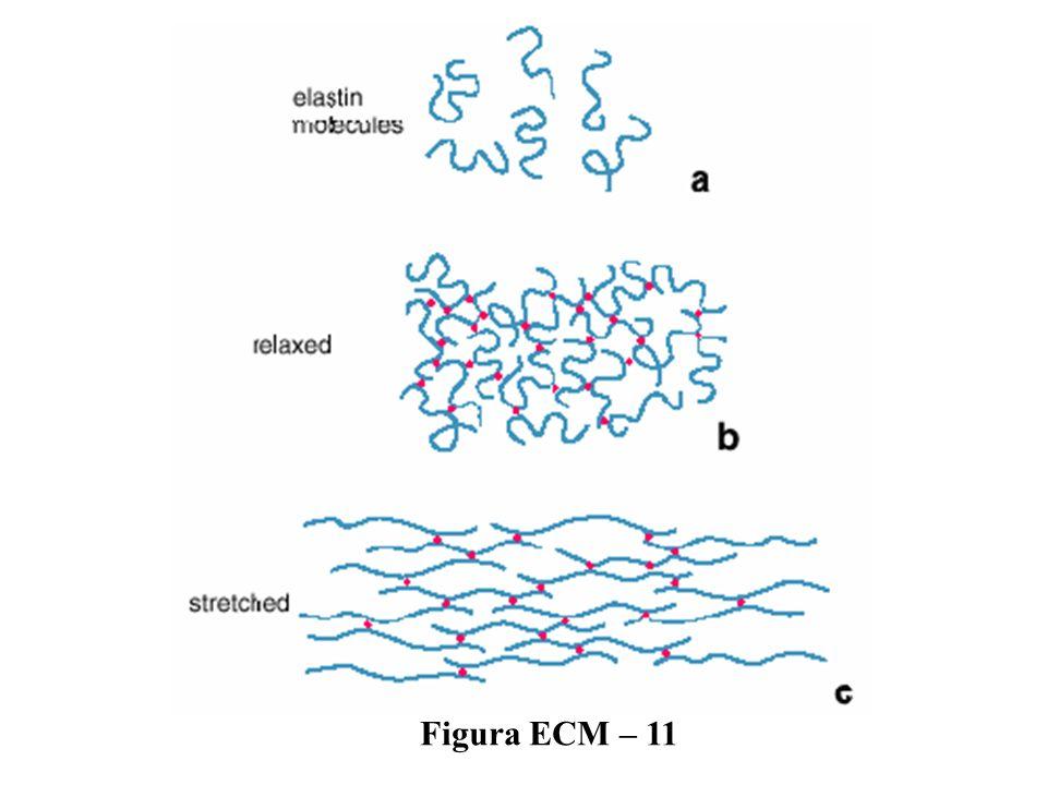 Figura ECM – 11