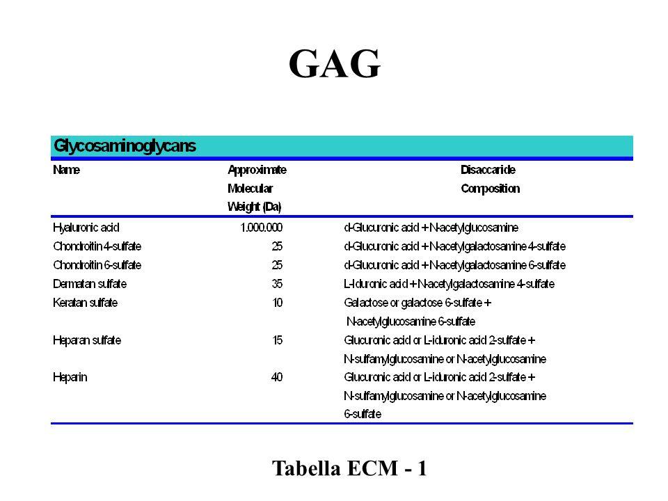 Tabella ECM - 1
