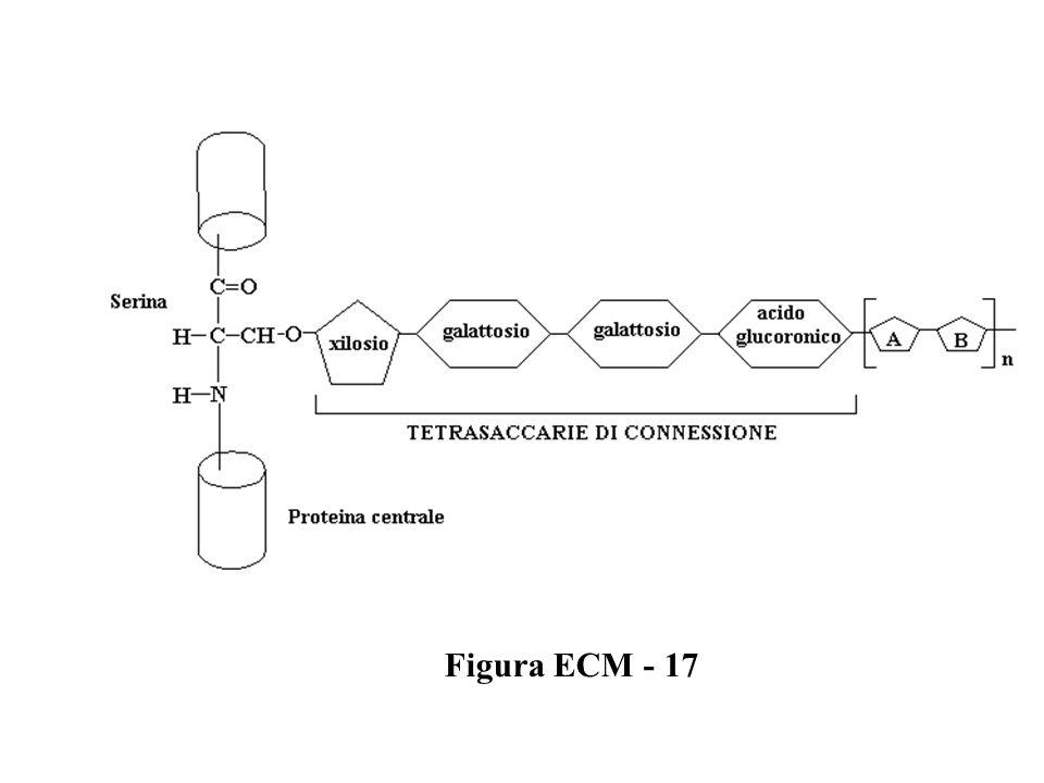 Figura ECM - 17