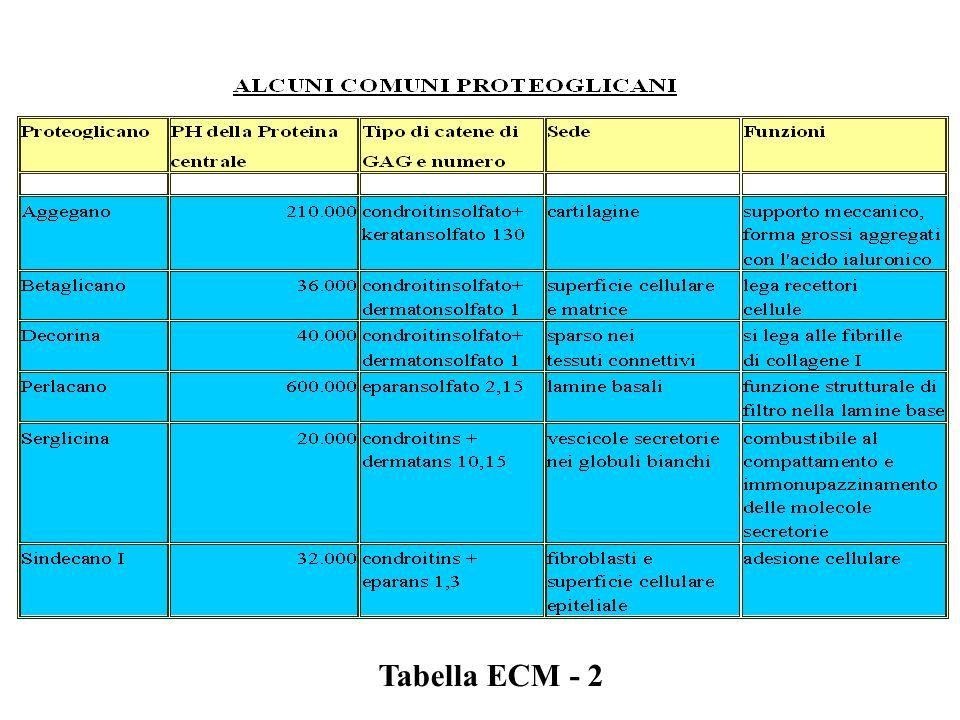Tabella ECM - 2