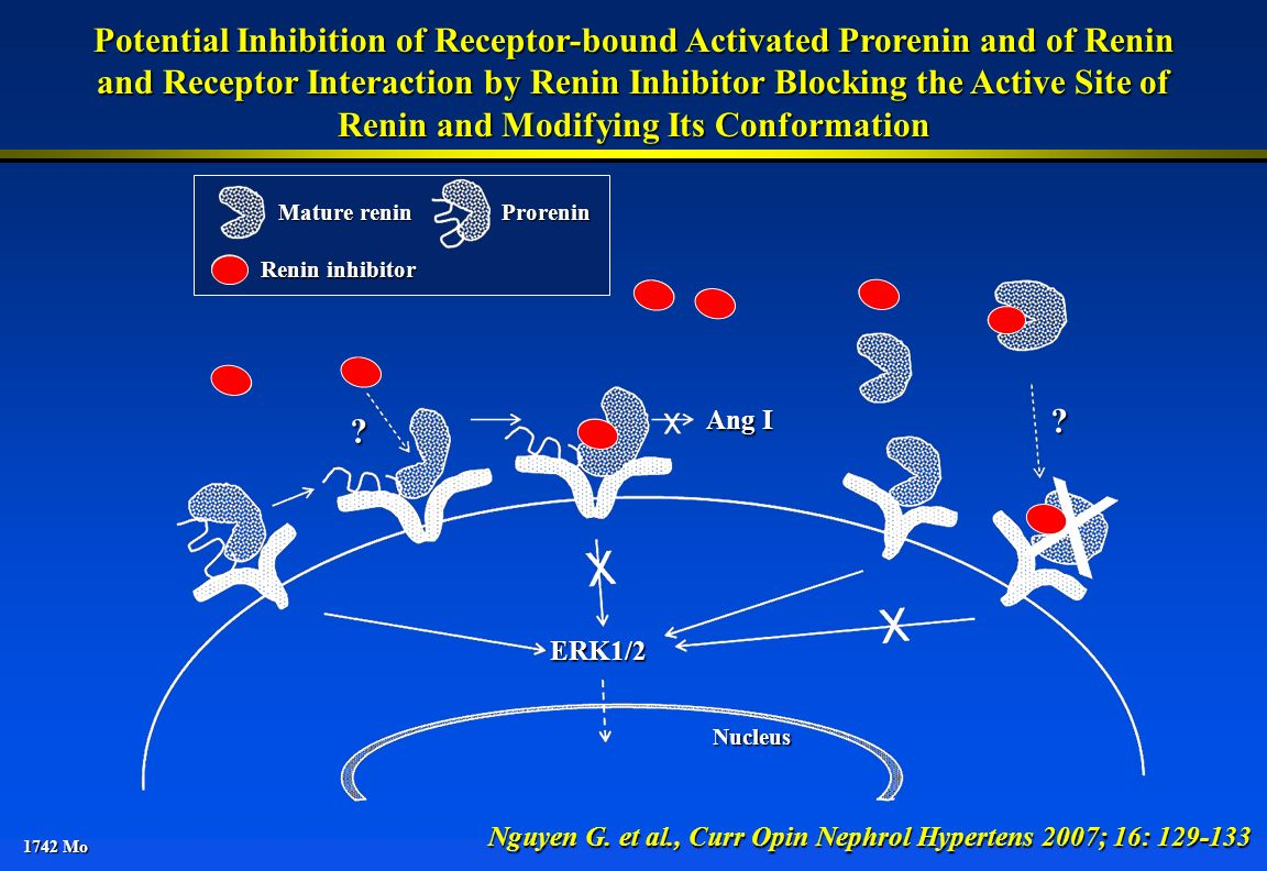 1742 Mo Potential Inhibition of Receptor-bound Activated Prorenin and of Renin and Receptor Interaction by Renin Inhibitor Blocking the Active Site of