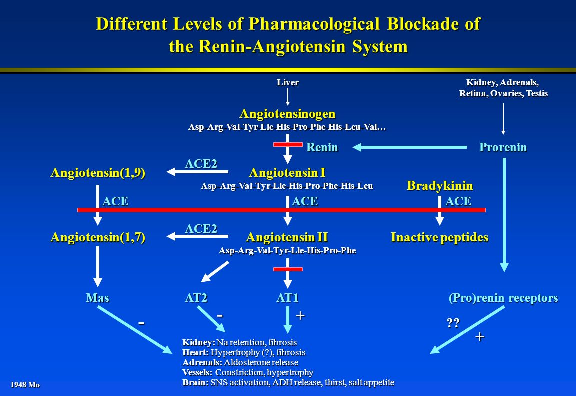 1948 Mo Different Levels of Pharmacological Blockade of the Renin-Angiotensin System AngiotensinogenAsp-Arg-Val-Tyr-Lle-His-Pro-Phe-His-Leu-Val… Angio