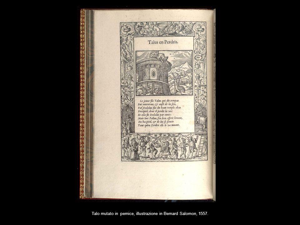 Talo mutato in pernice, illustrazione in Bernard Salomon, 1557.