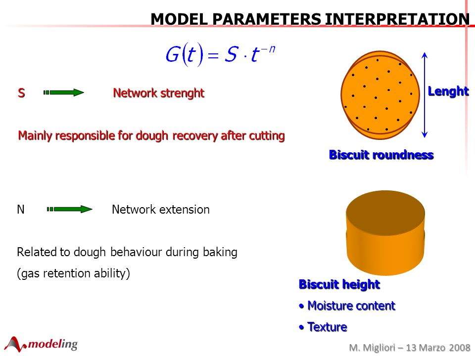 M. Migliori – 13 Marzo 2008 Lenght MODEL PARAMETERS INTERPRETATION S Network strenght Mainly responsible for dough recovery after cutting Biscuit roun