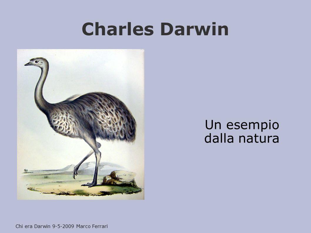 Charles Darwin Un esempio dalla natura Chi era Darwin 9-5-2009 Marco Ferrari