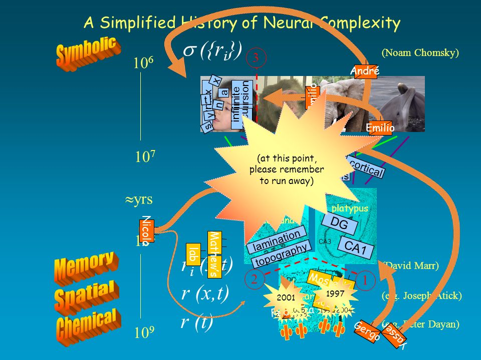 mammalian species yrs A Simplified History of Neural Complexity r (t) (e.g.
