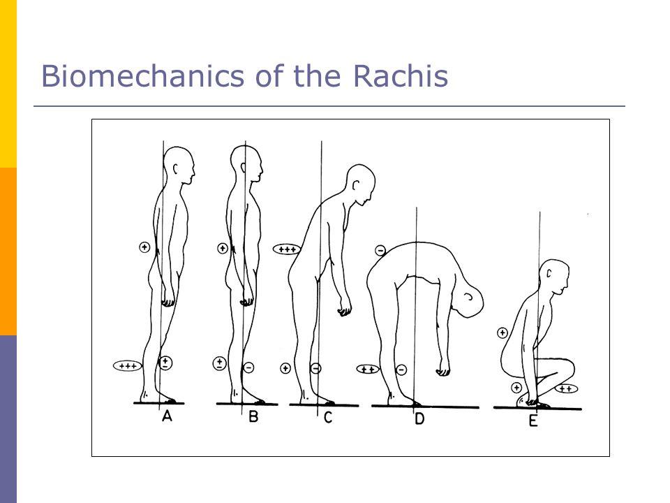 Biomechanics of the Rachis