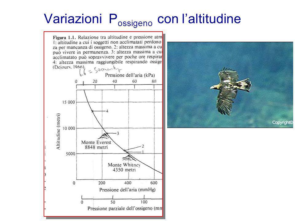 Variazioni P ossigeno con laltitudine
