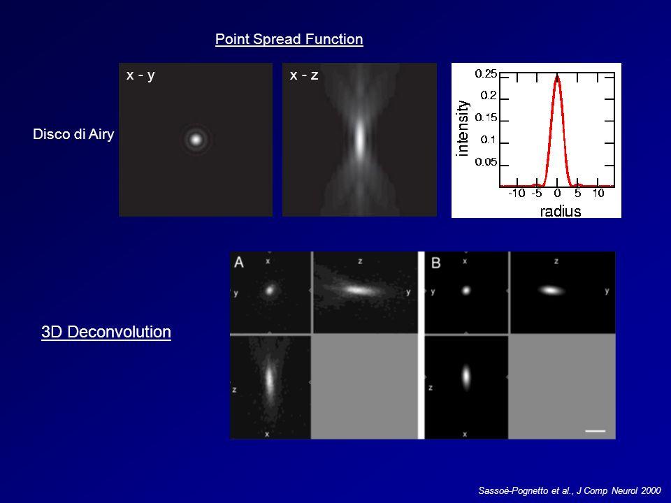 Point Spread Function x - yx - z Disco di Airy 3D Deconvolution Sassoè-Pognetto et al., J Comp Neurol 2000