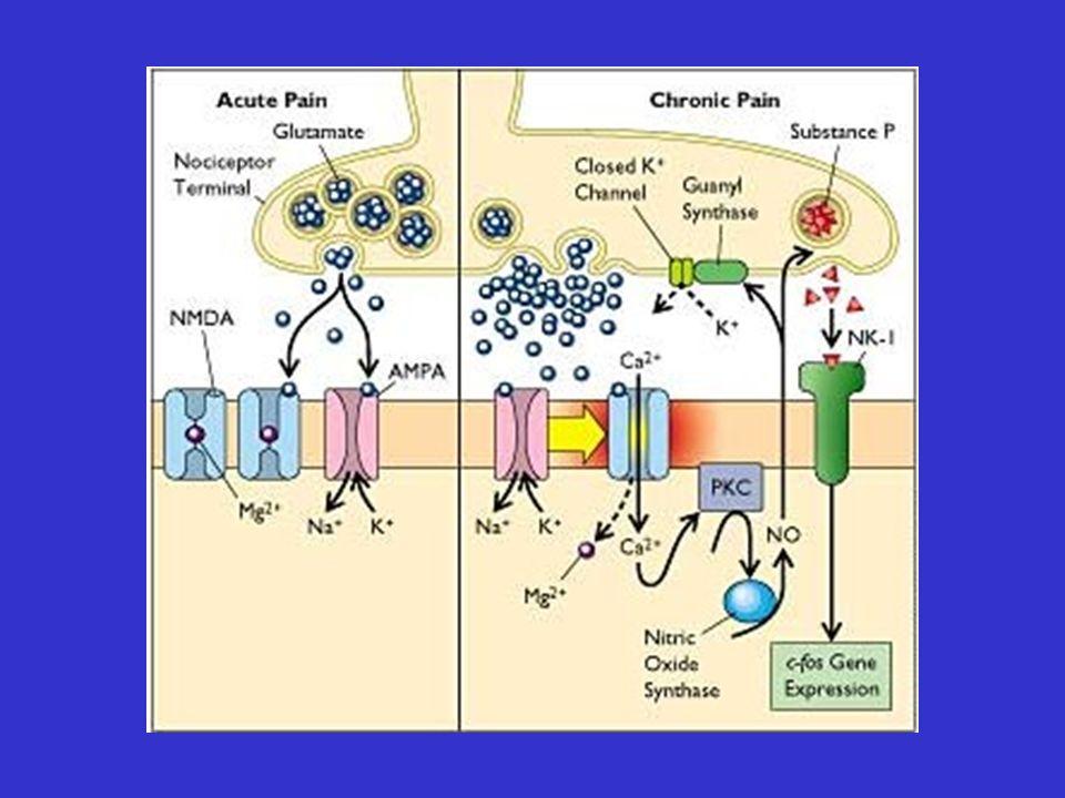 DrugDose (mg) Carbamazepine Lamotrigine Gabapentin Oxcarbazepine Pregabalin 400 -1200 150 - 400 300 –1200 0.5 – 2 150-300