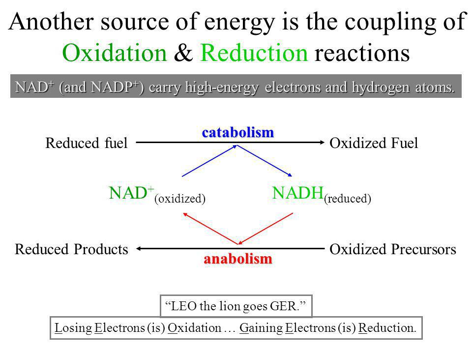 Another source of energy is the coupling of Oxidation & Reduction reactions anabolism catabolism Reduced fuel Reduced Products Oxidized Fuel Oxidized
