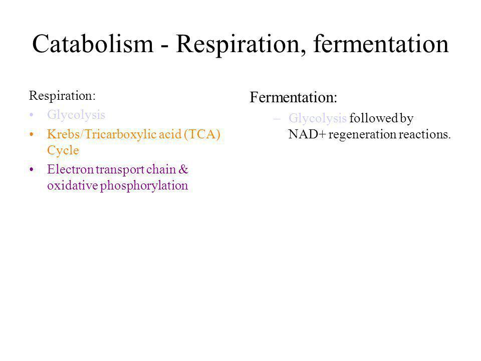 Catabolism - Respiration, fermentation Respiration: Glycolysis Krebs/Tricarboxylic acid (TCA) Cycle Electron transport chain & oxidative phosphorylati