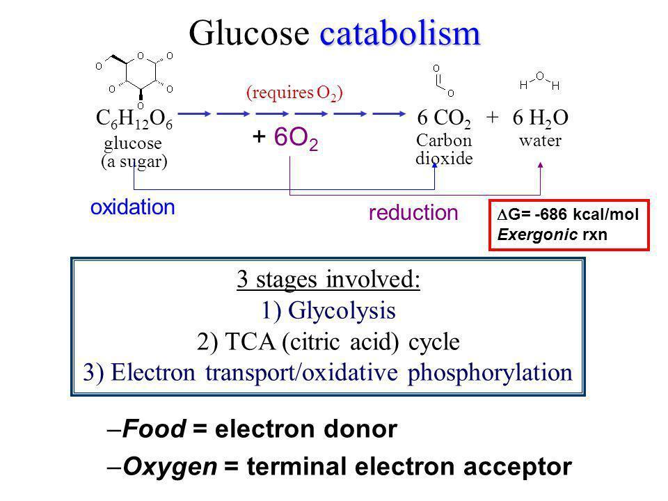 catabolism Glucose catabolism glucose (a sugar) C 6 H 12 O 6 +6 CO 2 Carbon dioxide 6 H 2 O water 3 stages involved: 1) Glycolysis 2) TCA (citric acid