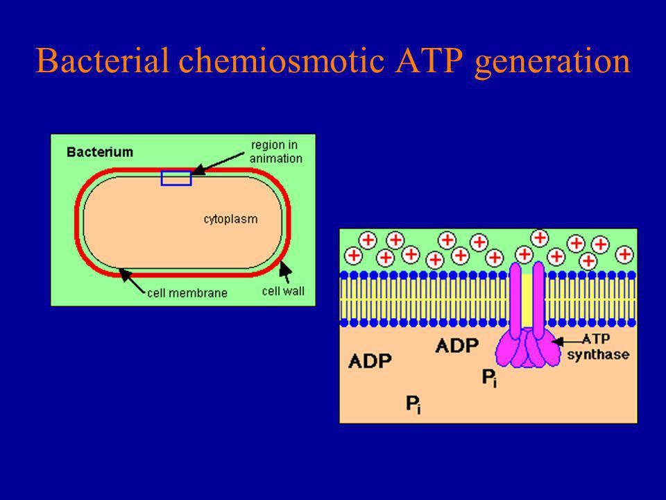 Bacterial chemiosmotic ATP generation