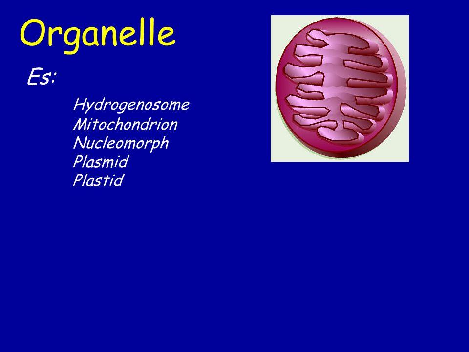 Organelle Es: Hydrogenosome Mitochondrion Nucleomorph Plasmid Plastid