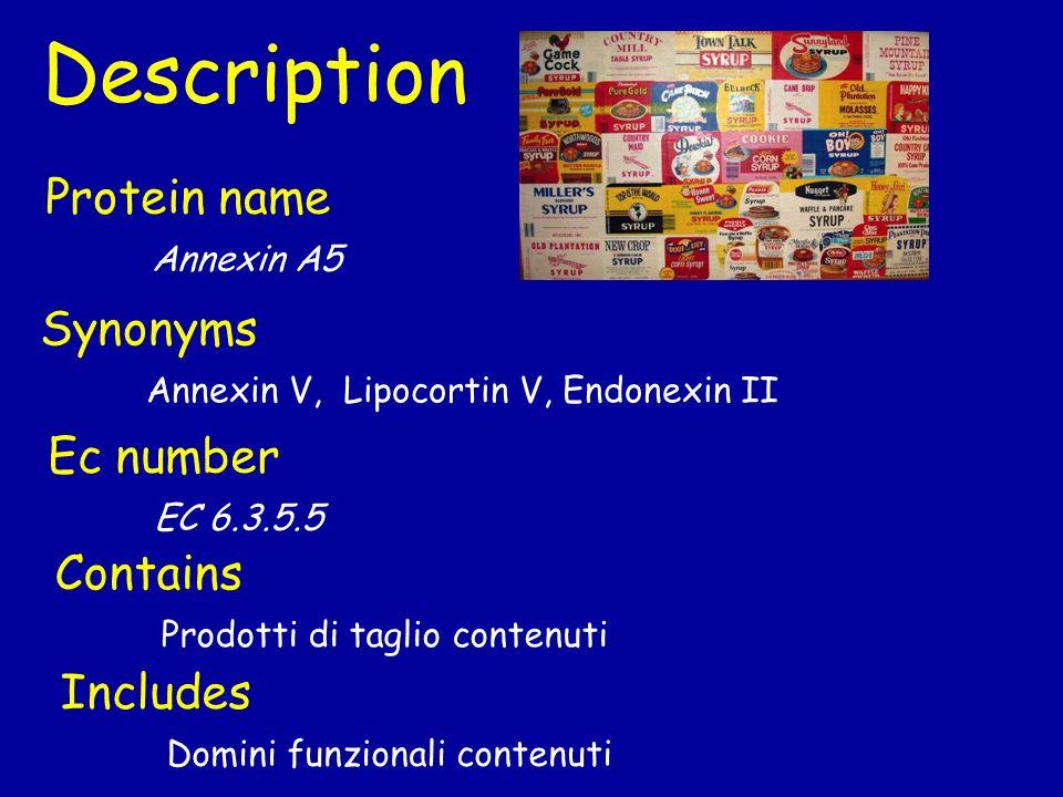 Gene Name Primary Phospholipase A2 Synonym cPLA2 Locus name Nome ordinato sul genoma Es: XAC2464 ORF name Nome temporaneo su genoma Es: ACAM_3000_MVA_081