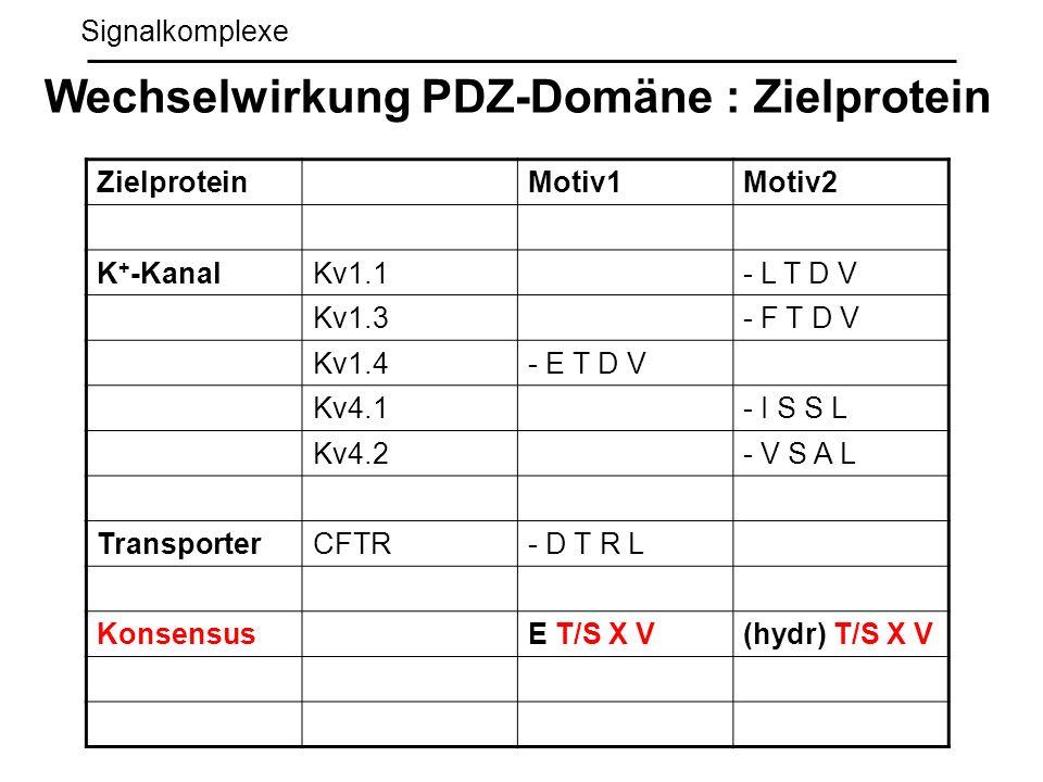Signalkomplexe Wechselwirkung PDZ-Domäne : Zielprotein ZielproteinMotiv1Motiv2 K + -KanalKv1.1- L T D V Kv1.3- F T D V Kv1.4- E T D V Kv4.1- I S S L K