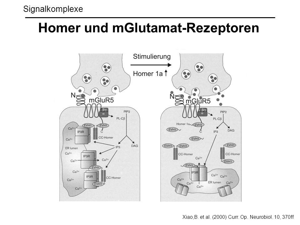 Signalkomplexe Homer und mGlutamat-Rezeptoren Xiao,B. et al. (2000) Curr. Op. Neurobiol. 10, 370ff