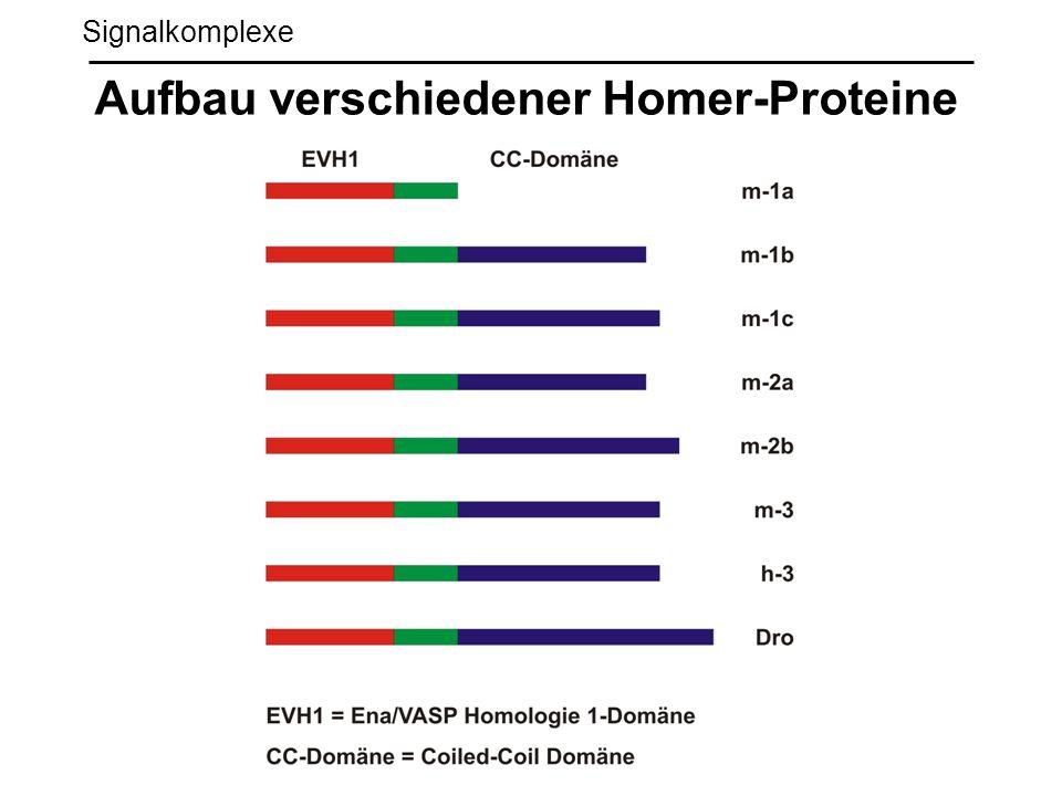 Signalkomplexe Aufbau verschiedener Homer-Proteine