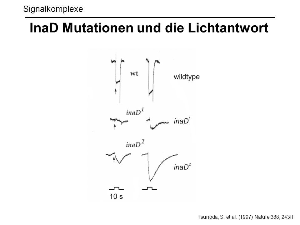 Signalkomplexe InaD Mutationen und die Lichtantwort Tsunoda, S. et al. (1997) Nature 388, 243ff