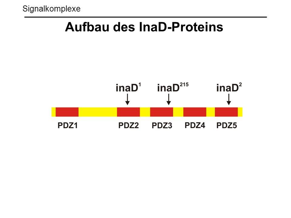 Signalkomplexe Aufbau des InaD-Proteins