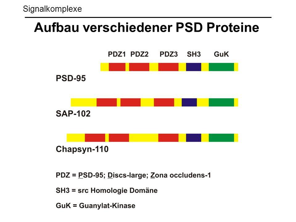 Signalkomplexe Aufbau verschiedener PSD Proteine