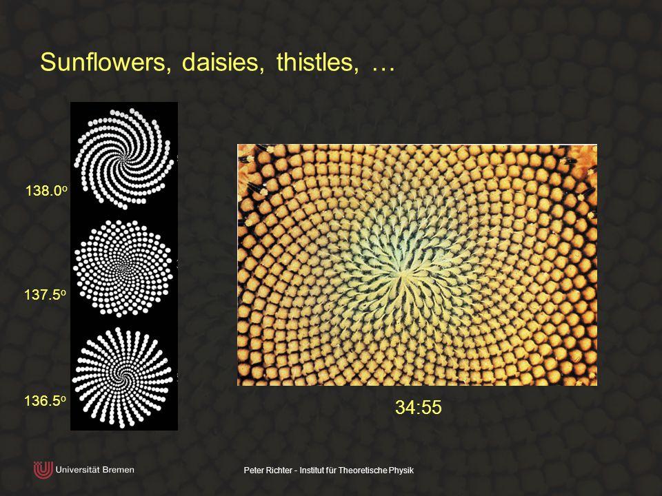 Peter Richter - Institut für Theoretische Physik Sunflowers, daisies, thistles, … 138.0 o 137.5 o 136.5 o 34:55
