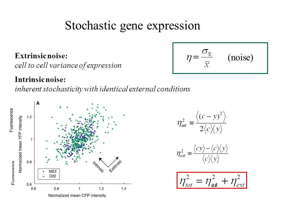 (noise) Intrinsic noise: inherent stochasticity with identical external conditions Extrinsic noise: cell to cell variance of expression Stochastic gene expression