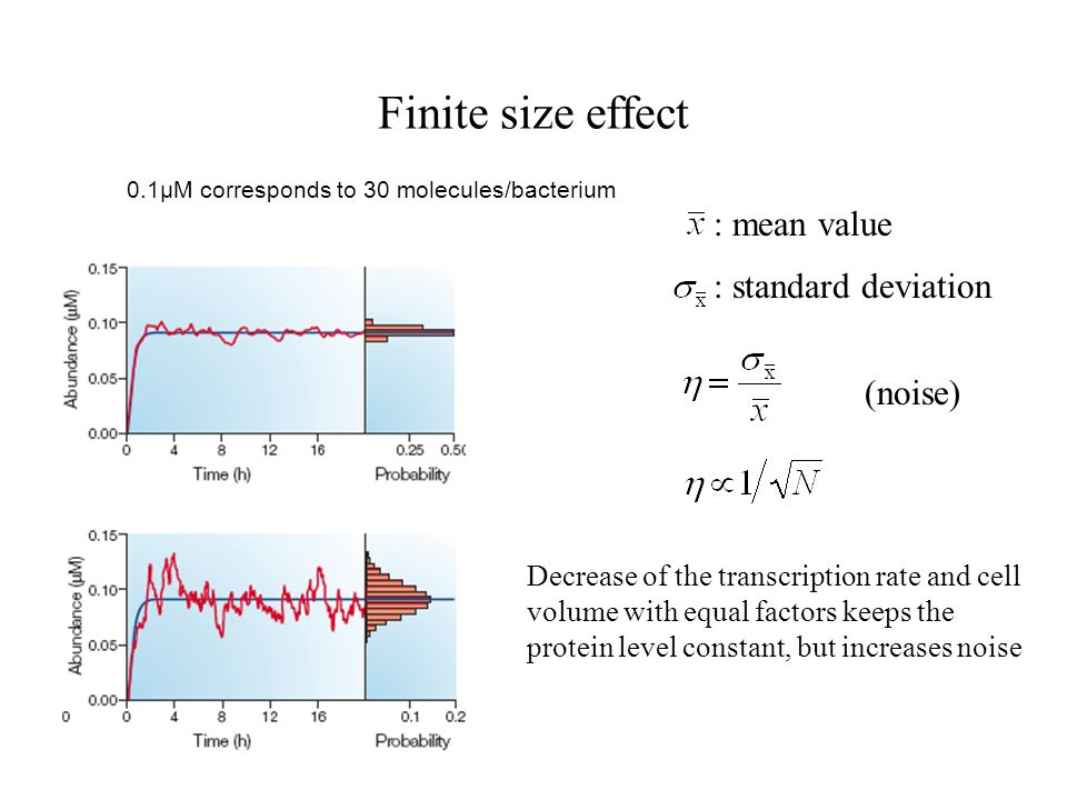 Finite size effect (noise) : mean value : standard deviation 0.1µM corresponds to 30 molecules/bacterium Decrease of the transcription rate and cell volume with equal factors keeps the protein level constant, but increases noise