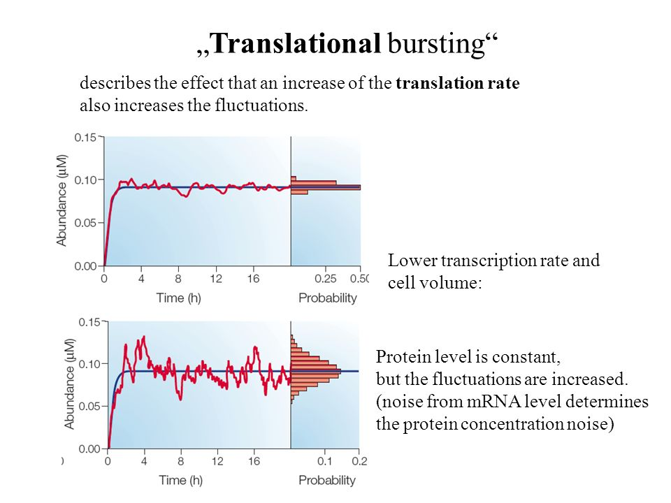 describes the effect that an increase of the translation rate also increases the fluctuations.