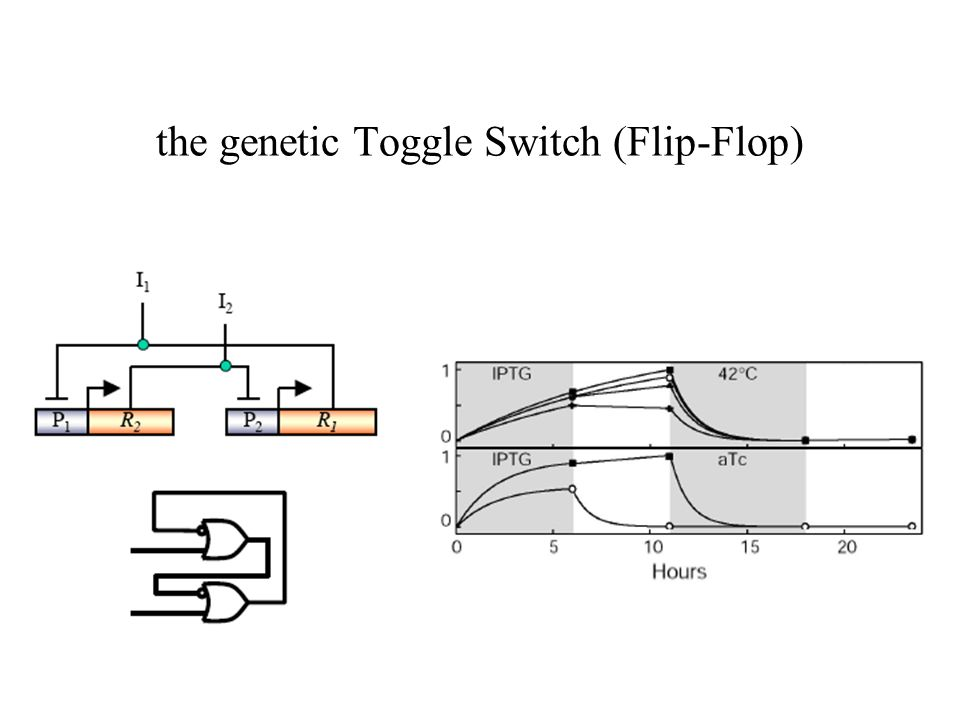 the genetic Toggle Switch (Flip-Flop)