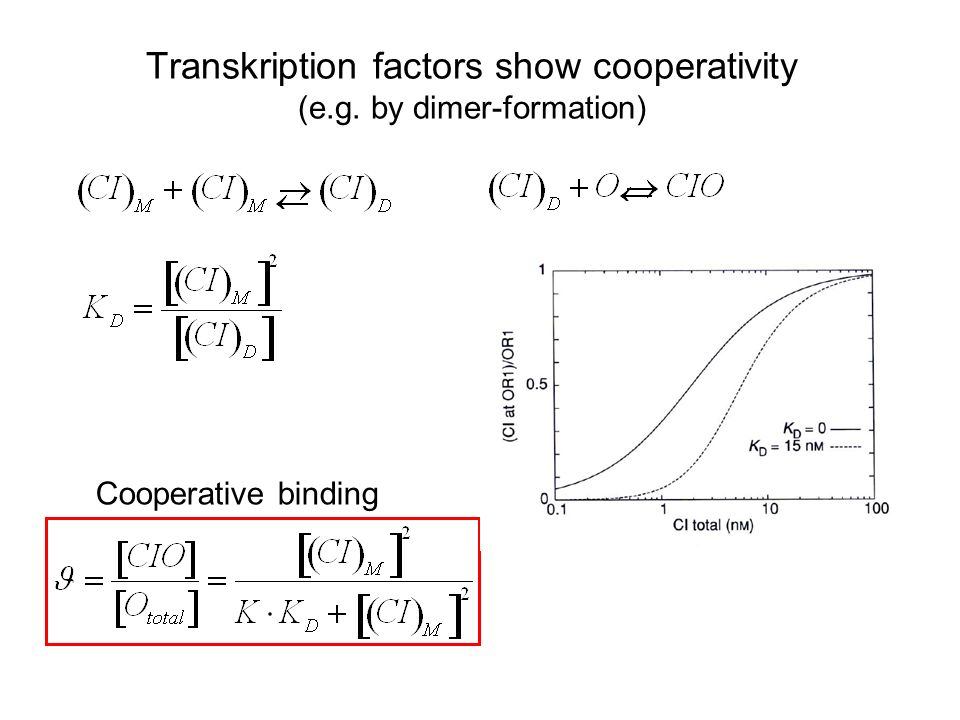 Transkription factors show cooperativity (e.g. by dimer-formation) Cooperative binding