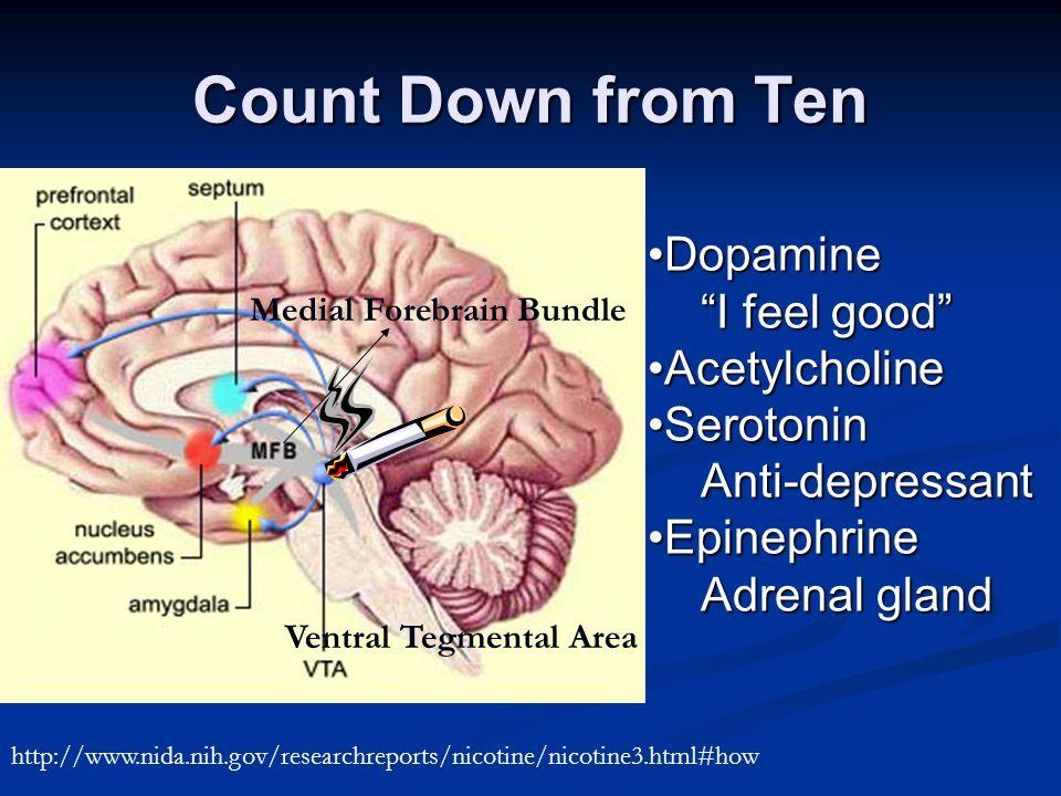 Count Down from Ten DopamineDopamine I feel good AcetylcholineAcetylcholine SerotoninSerotoninAnti-depressant EpinephrineEpinephrine Adrenal gland Ventral Tegmental Area Medial Forebrain Bundle http://www.nida.nih.gov/researchreports/nicotine/nicotine3.html#how