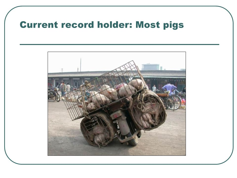 Current record holder: Most pigs