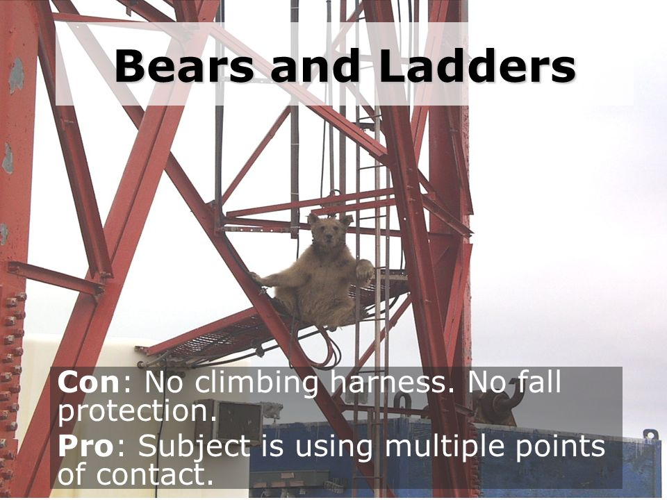 Bears and Ladders Con: No climbing harness. No fall protection. Pro: Subject is using multiple points of contact.