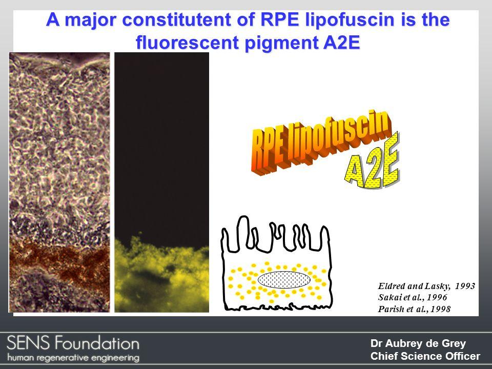 Dr Aubrey de Grey Chief Science Officer A major constitutent of RPE lipofuscin is the fluorescent pigment A2E Eldred and Lasky, 1993 Sakai et al., 199
