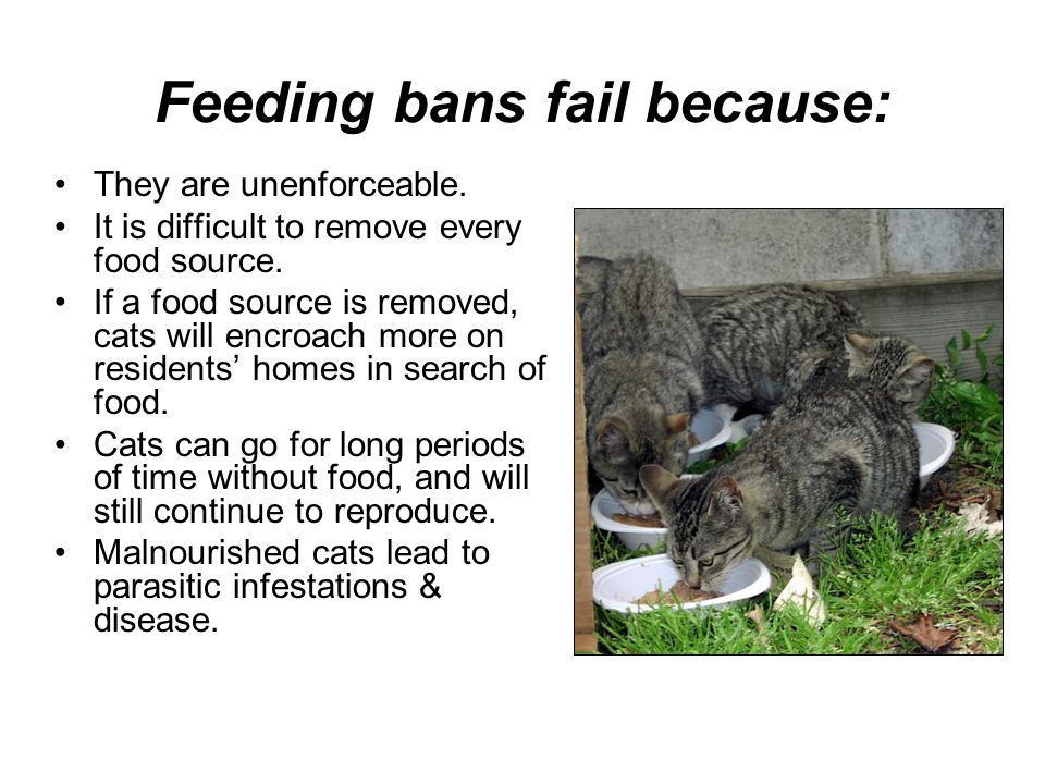 Feeding bans fail because: They are unenforceable. It is difficult to remove every food source. If a food source is removed, cats will encroach more o