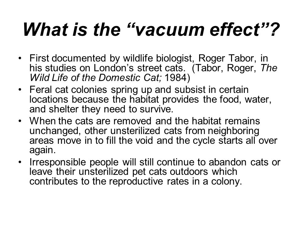 What is the vacuum effect? First documented by wildlife biologist, Roger Tabor, in his studies on Londons street cats. (Tabor, Roger, The Wild Life of