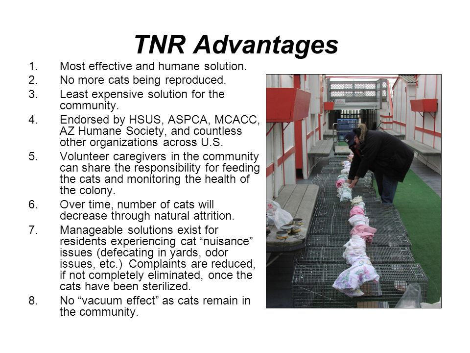 TNR Advantages 1.Most effective and humane solution. 2.No more cats being reproduced. 3.Least expensive solution for the community. 4.Endorsed by HSUS