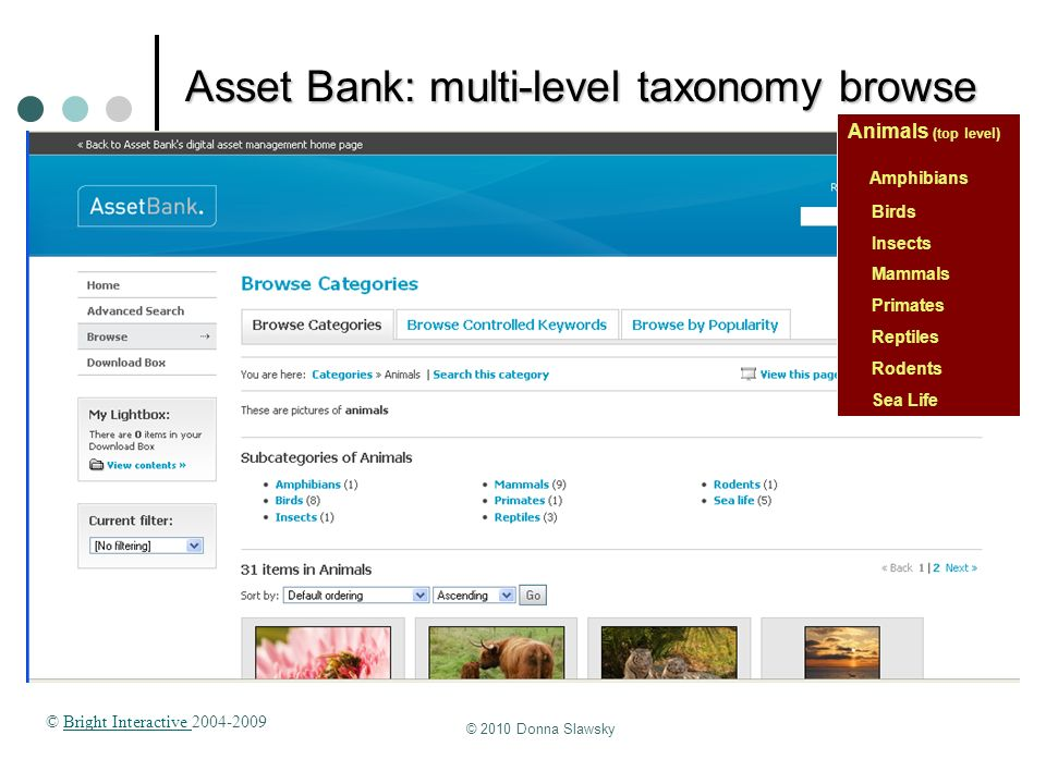© 2010 Donna Slawsky Asset Bank: multi-level taxonomy browse Animals (top level) Amphibians Birds Insects Mammals Primates Reptiles Rodents Sea Life ©