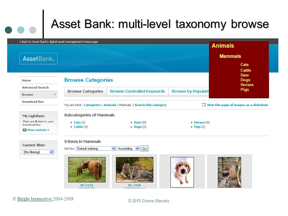 © 2010 Donna Slawsky Asset Bank: multi-level taxonomy browse Animals Mammals Cats Cattle Deer Dogs Horses Pigs © Bright Interactive 2004-2009Bright In
