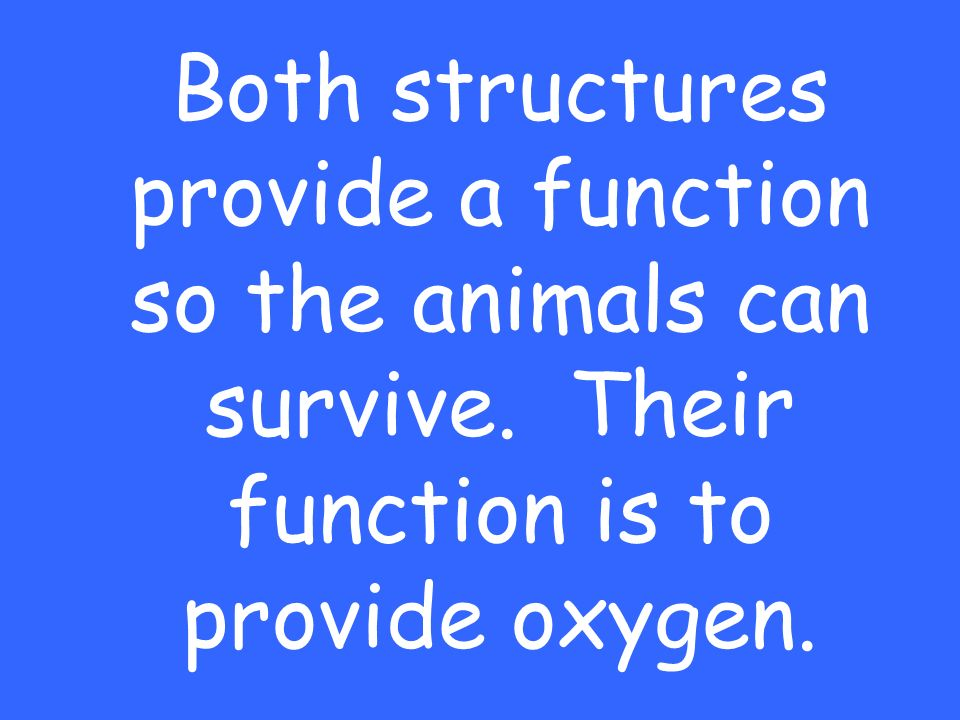 Both structures provide a function so the animals can survive. Their function is to provide oxygen.