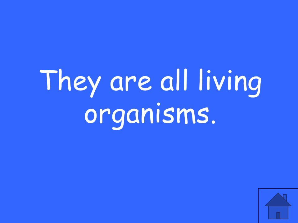 They are all living organisms.