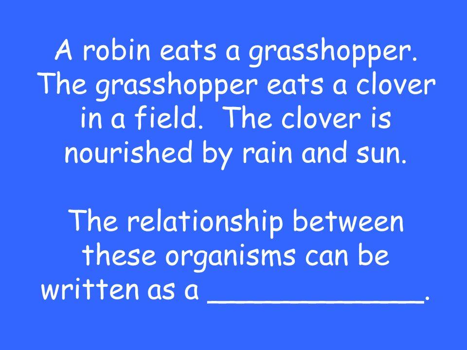 A robin eats a grasshopper.The grasshopper eats a clover in a field.