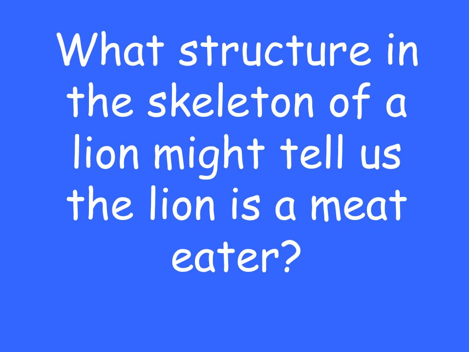What structure in the skeleton of a lion might tell us the lion is a meat eater?
