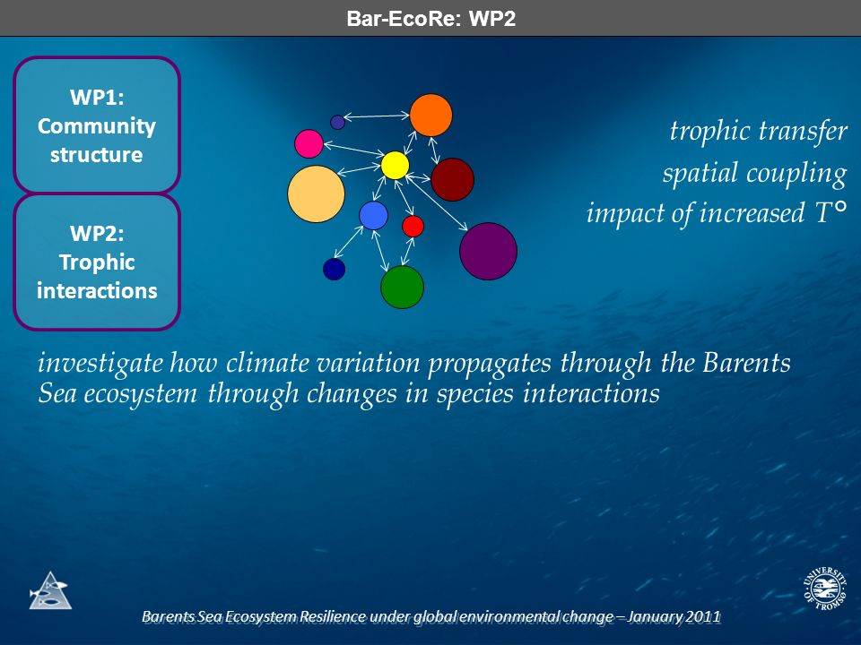 Barents Sea Ecosystem Resilience under global environmental change – January 2011 Bar-EcoRe: WP2 WP1: Community structure WP2: Trophic interactions investigate how climate variation propagates through the Barents Sea ecosystem through changes in species interactions trophic transfer spatial coupling impact of increased T°