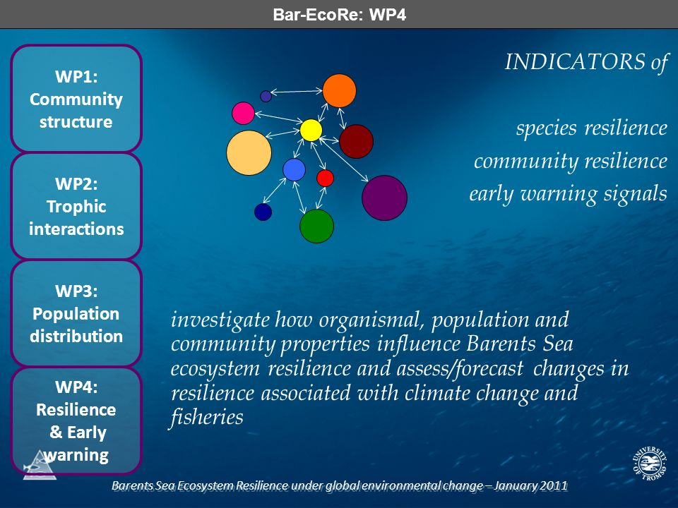 Barents Sea Ecosystem Resilience under global environmental change – January 2011 Bar-EcoRe: WP4 WP1: Community structure WP2: Trophic interactions WP