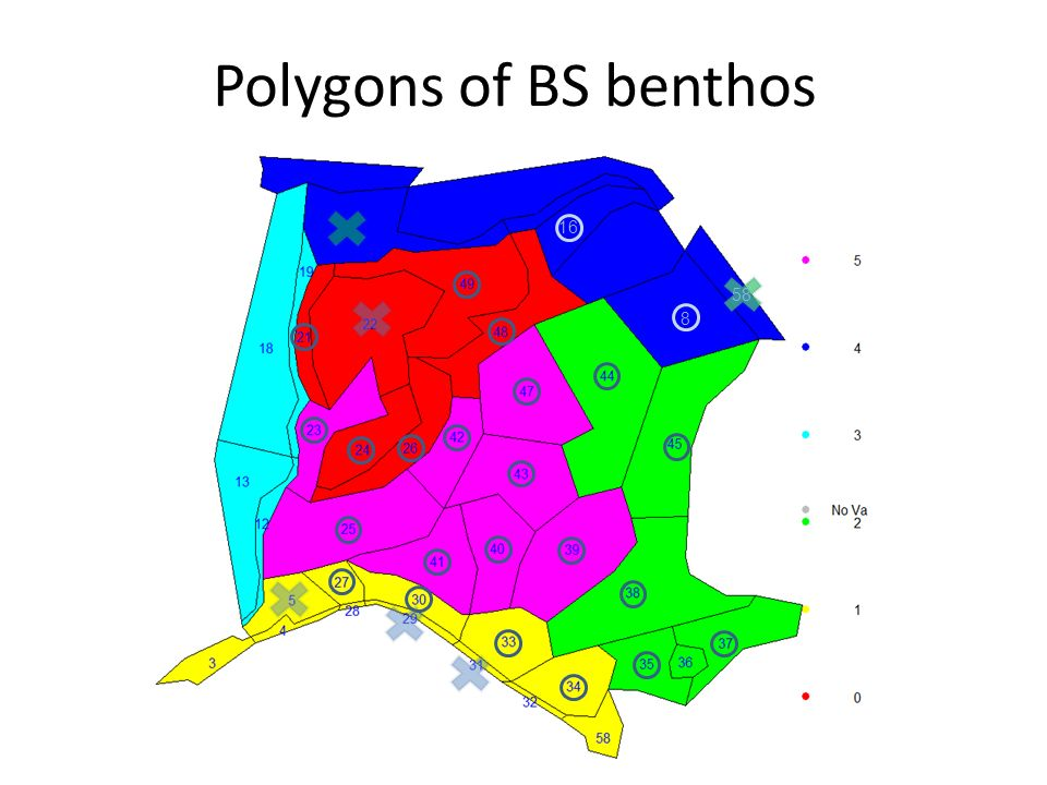 Polygons of BS benthos 8 16 58