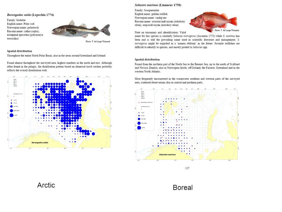 Arctic Boreal
