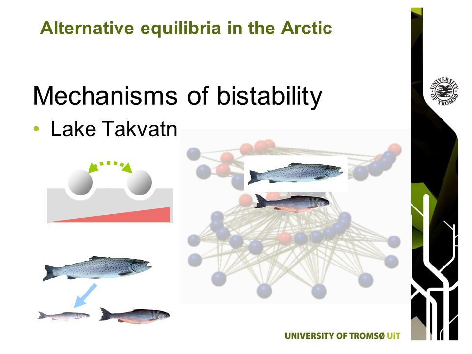Mechanisms of bistability Lake Takvatn Alternative equilibria in the Arctic